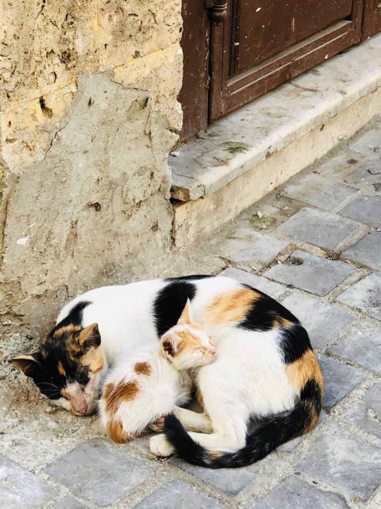 strassenkatzen